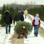 Family-At-Cut-Your-Own-Christmas-Tree-Farm-300x248